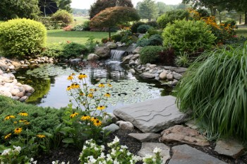 Landscaping Services In San Jose And Silicon Valley